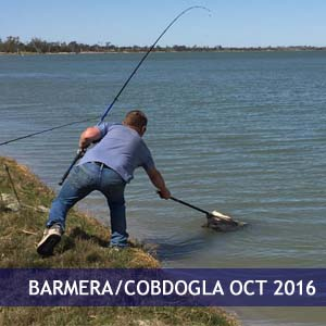 Barmera/Cobdogla Oct 2016